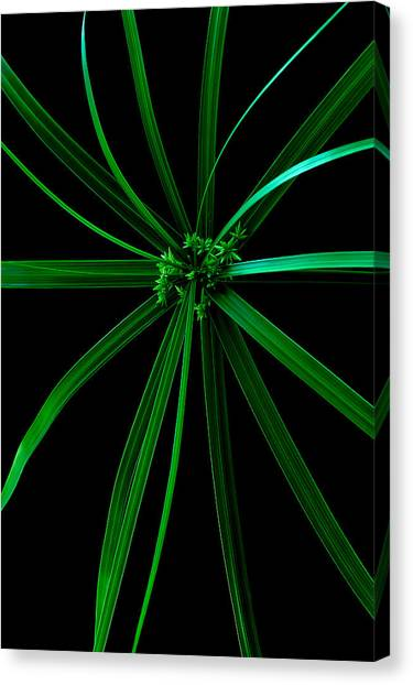 Spider Plant Canvas Print