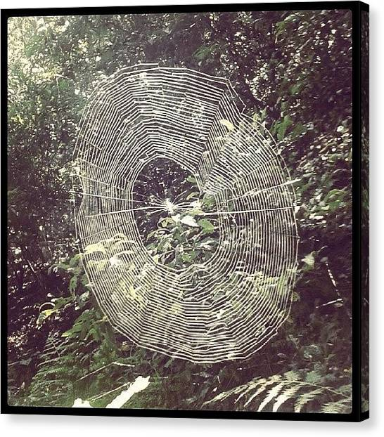 Beauty Canvas Print - Spider by Raimond Klavins
