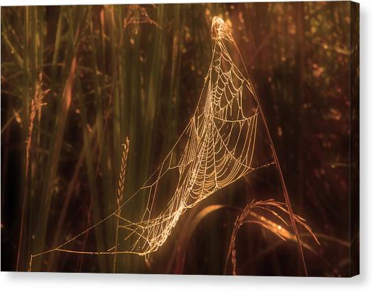 Spider Web A Canvas Print by Jim Vance
