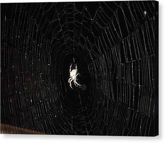Spider Web Canvas Print