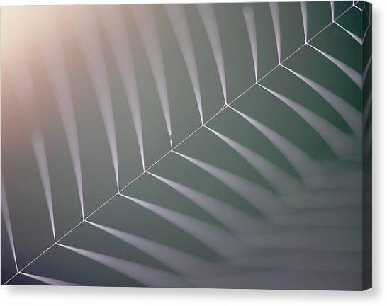 Spider Web Canvas Print by Manuel Presti/science Photo Library