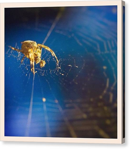 Spider Web Canvas Print - Spidey. #spider #arachnid #cobweb #web by Harvey Mills