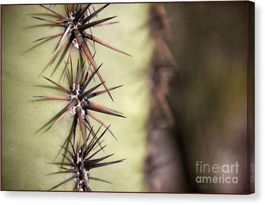 Spike On Guard Canvas Print