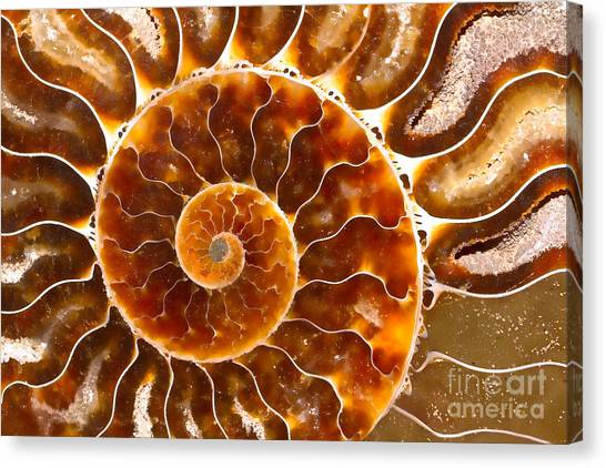 Spiral Center Of An Ammonite Fossil Canvas Print