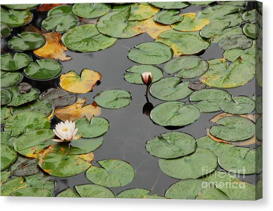 Spirit Lake Lillies Canvas Print