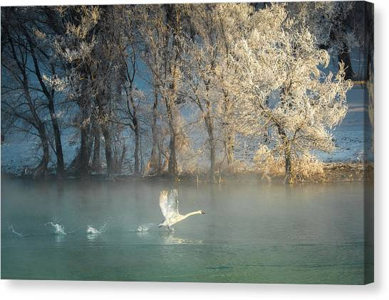Swan Canvas Print - Spirit Of A Swan by C. Mei