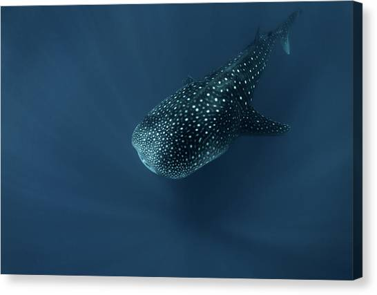 Spirit Canvas Print - Spirit Of Deep Water by Andrey Narchuk