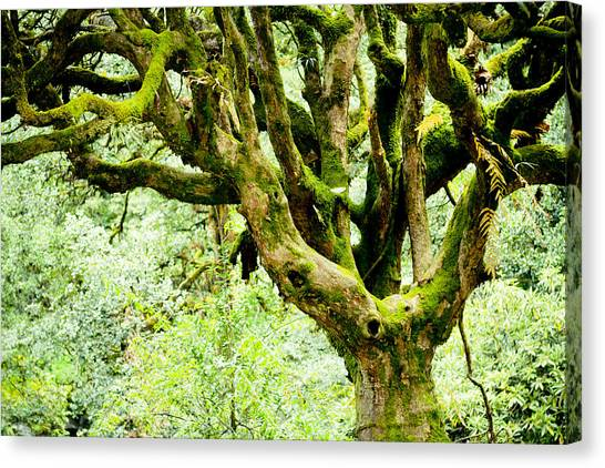 Forests Canvas Print - Spirit Of Forest by Raimond Klavins