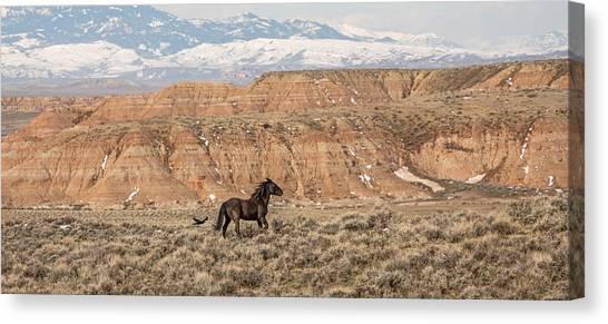 Black Stallion Canvas Print - Spirit Walker by Sandy Sisti