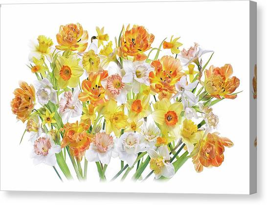Daffodils Canvas Print - Spirited by Jacky Parker