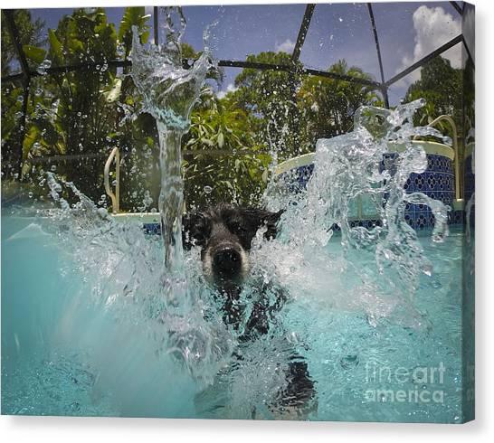 Splash Down Canvas Print