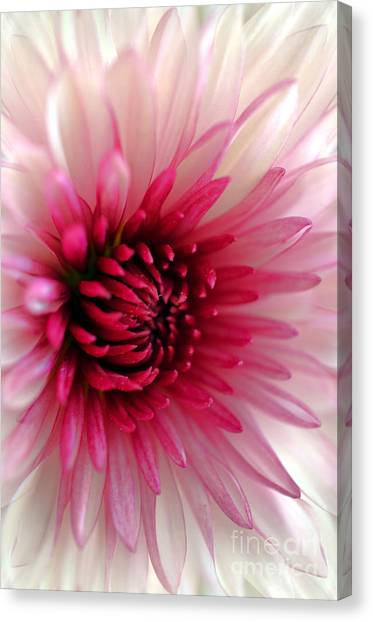Splash Of Pink Canvas Print