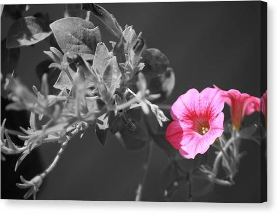 Splash Of Pink Canvas Print by Kimberly Elliott