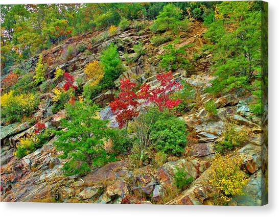 Splashes Of Fall Canvas Print
