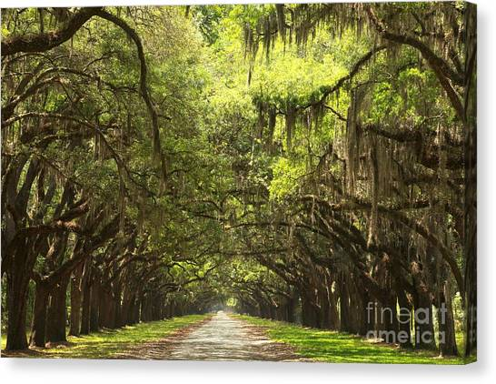 Splendid Oak Drive Canvas Print