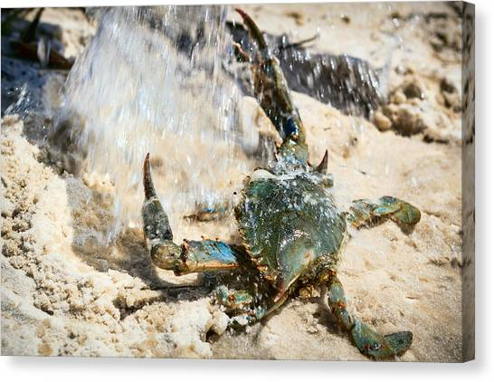 Atlantic 10 Canvas Print - Splish Splash by Sennie Pierson