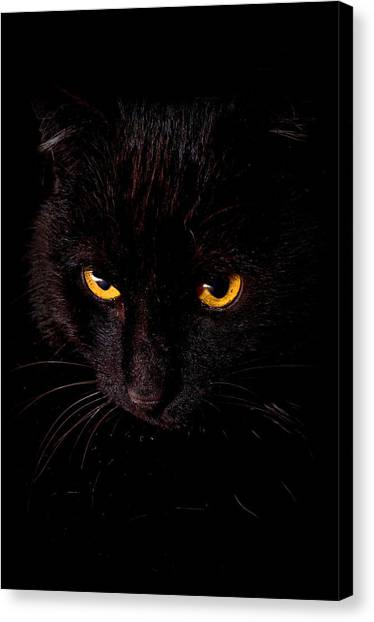 Manx Cats Canvas Print - Spooks Black Cat On Black by Laura Strain