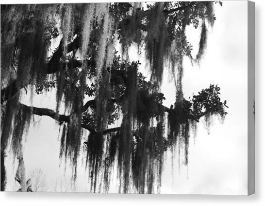 Spooky Trees Canvas Print by Cyndi Lenz