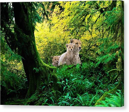 Leapords Canvas Print - Spots by Julie Carter