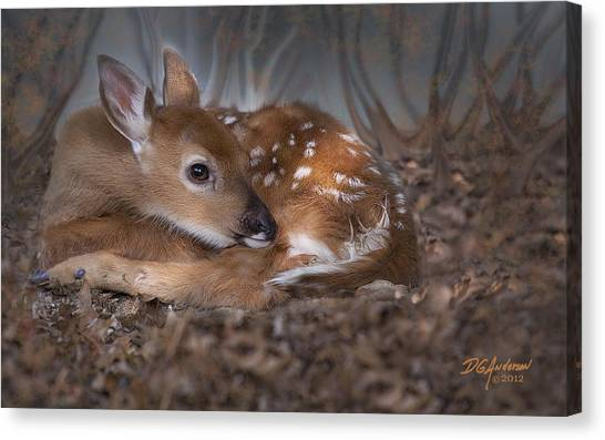Spotted Innocence Canvas Print by Don Anderson