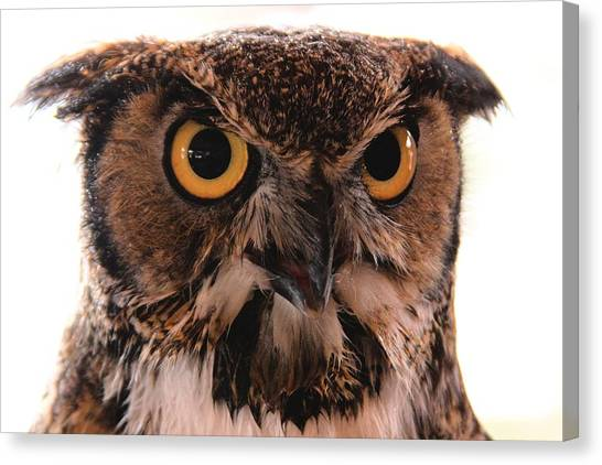 Spotted Owl 1 Canvas Print
