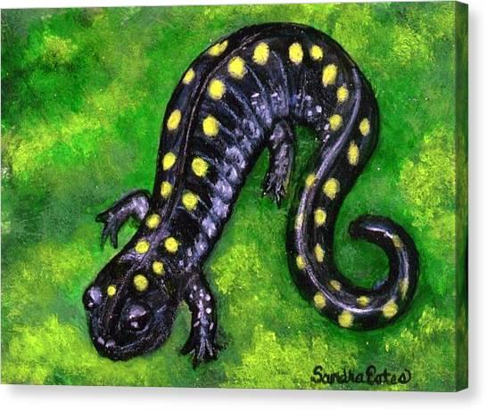 Spotted Salamander Canvas Print