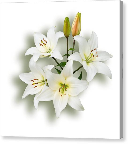 Spray Of White Lilies Canvas Print