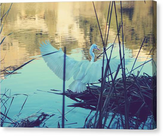 Egrets Canvas Print - Spread Those Wings And Fly by Laurie Search