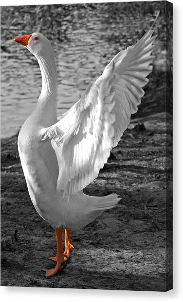 Spread Your Wings B And W Canvas Print