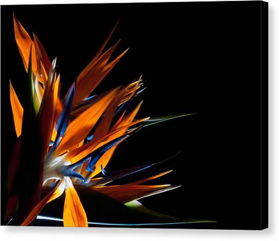 Spreading Paradise  Canvas Print by Todd Edson