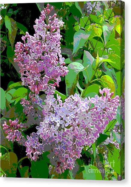 Spring 15 Canvas Print by Shirley Sparks