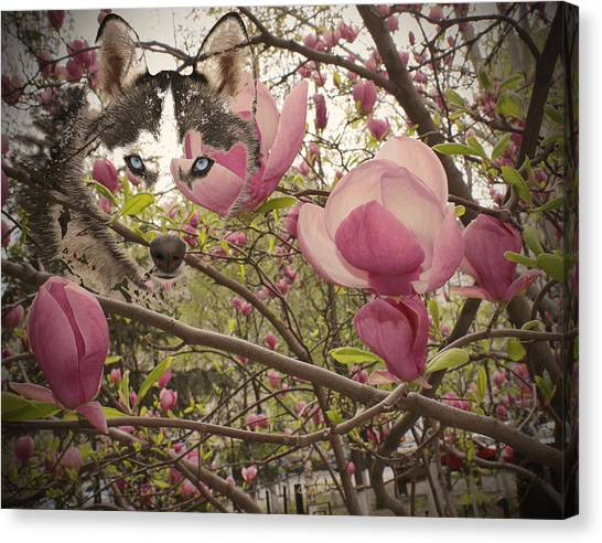 Spring And Beauty Canvas Print