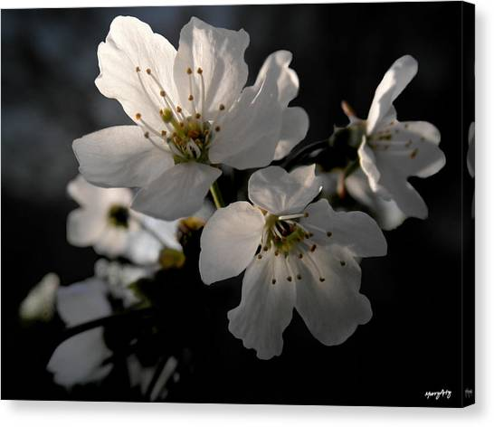 Spring Emerging Canvas Print