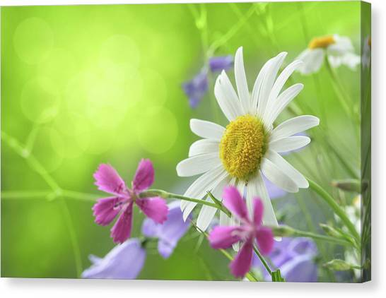Spring Background Canvas Print by Pobytov
