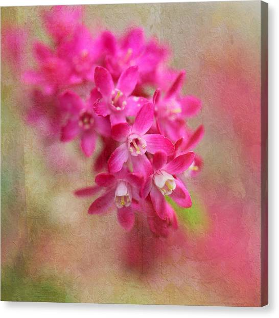 Spring Beauty Canvas Print