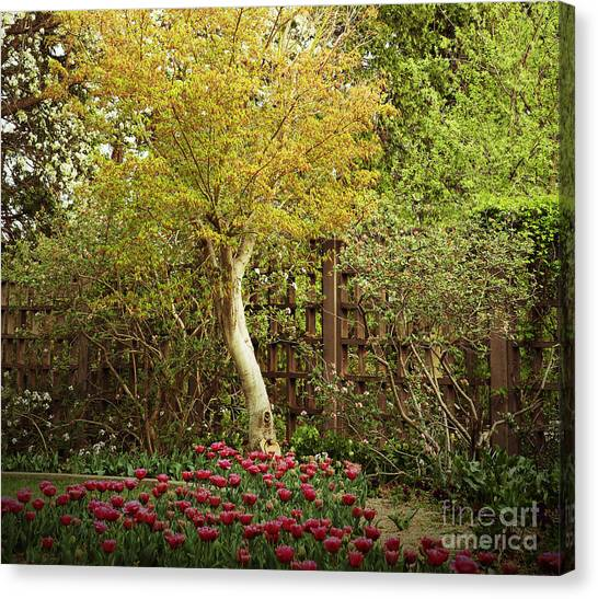 Tiptoe Thru The Tulips Canvas Print