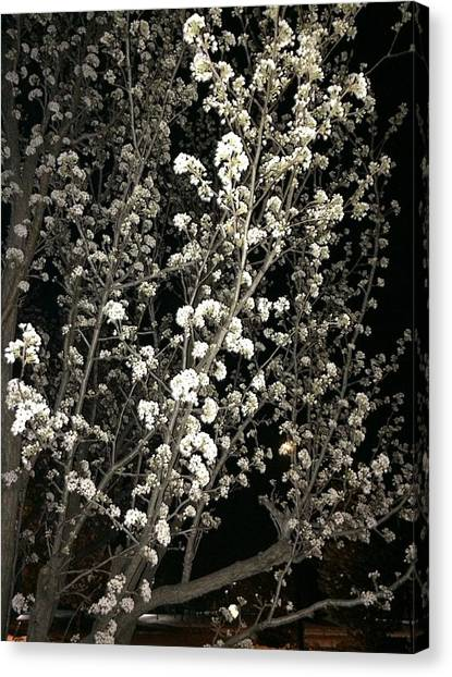 Spring Blossoms Glowing Canvas Print