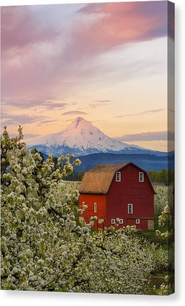 Spring Blossoms Sunrise Canvas Print