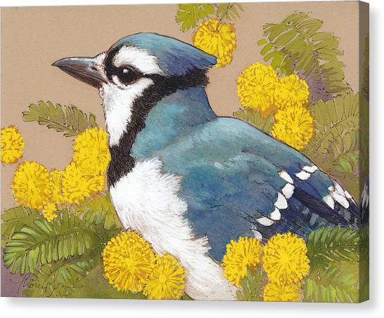 Mimosa Canvas Print - Blue Jay In The Mimosa Tree by Tracie Thompson