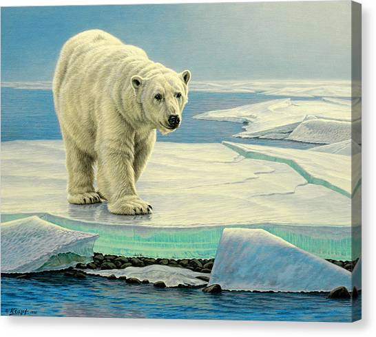Polar Bears Canvas Print - Spring Break by Paul Krapf