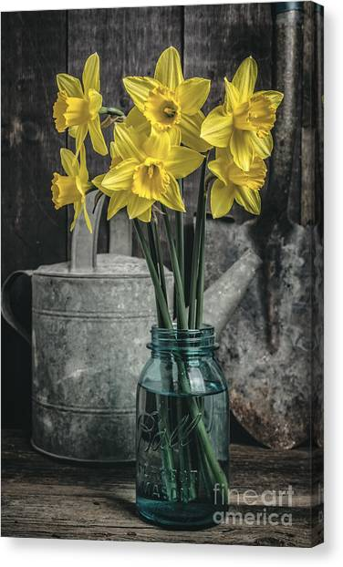 Daffodils Canvas Print - Spring Daffodil Flowers by Edward Fielding