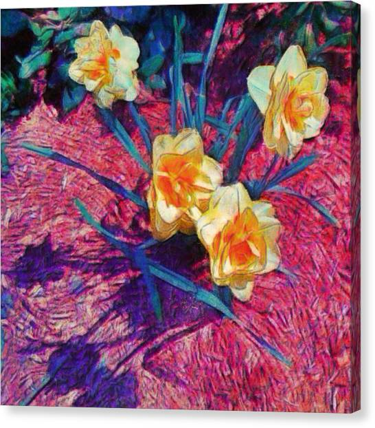 Spring Daffodils On Red - Square Canvas Print