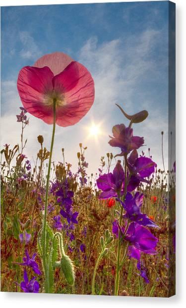 Poppys Canvas Print - Spring   by Debra and Dave Vanderlaan