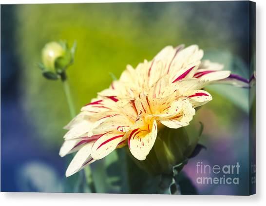 Spring Dream Jewel Tones Canvas Print