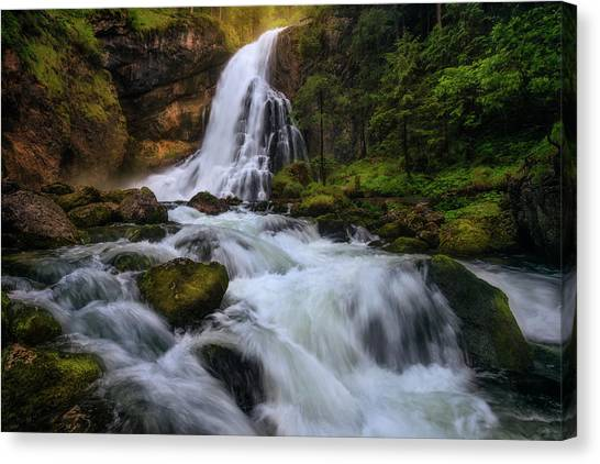 Fir Trees Canvas Print - Spring Flood by Daniel F.