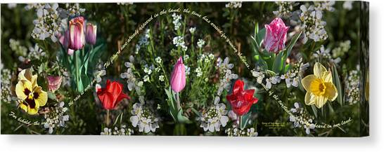Song of spring canvas prints page 5 of 6 fine art america song of spring canvas print spring flower pano by cheryl mills mightylinksfo