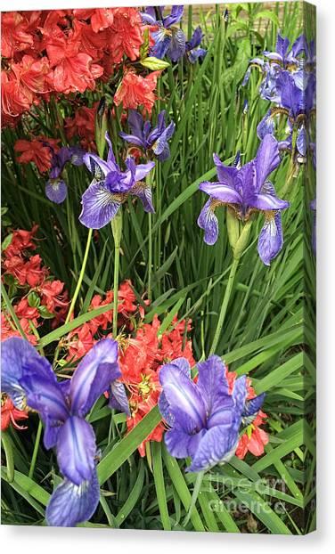 Spring Flowers 1 Canvas Print