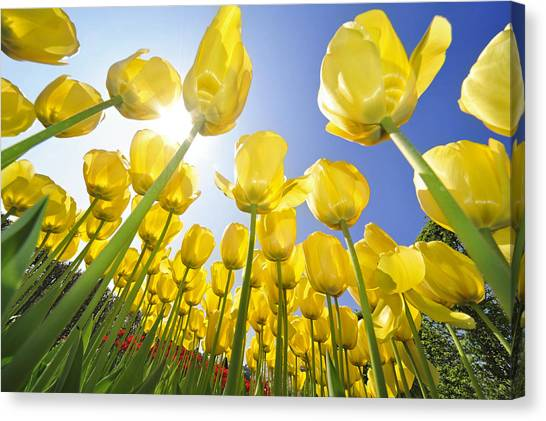 Spring Flowers 5 Canvas Print
