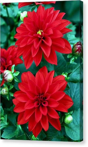 Canvas Print featuring the photograph Spring Flowers 5 by Bob Slitzan