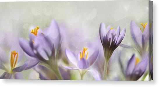 Close-up Canvas Print - Spring Flowers by Heidi Westum